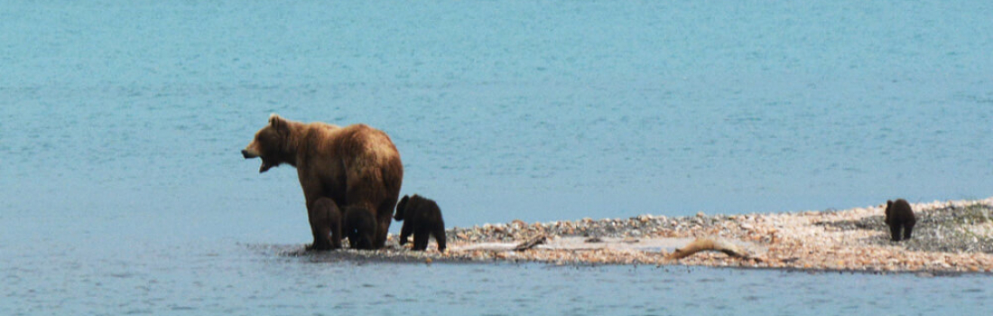Man & Beast: Understanding the grizzly bear