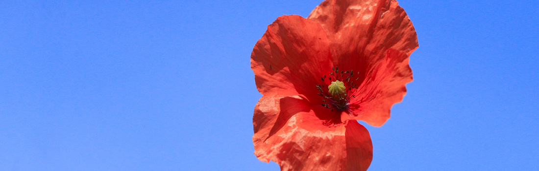 100 Years: In Remembrance of World War 1 & Every War Since